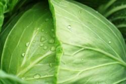 Капустный лист против гигромы